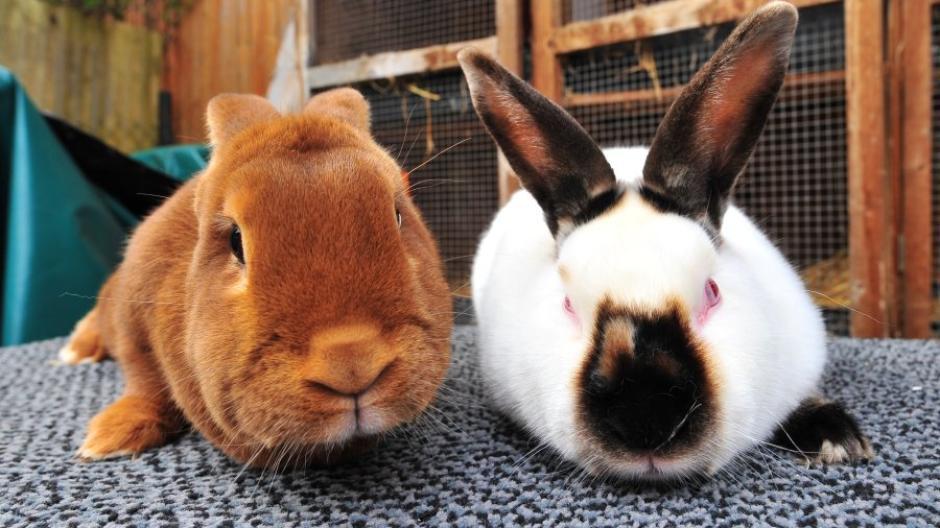 Kleintierzuchtverein  Kleintierzuchtverein Von Hasen und Hühnerzüchtern