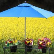Blumensträuße stehen am Tag vor Muttertag am Straßenrand im mittelfränkischen Dinkelsbühl vor einem gelb blühenden Rapsfeld zum Verkauf. Foto: Karl-Josef Hildenbrand