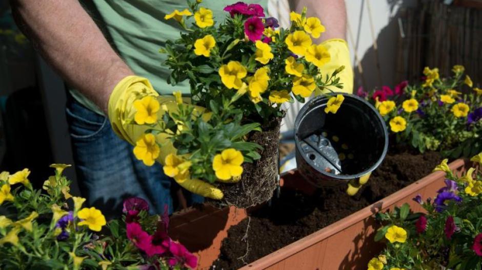 Hobbygärtner Grün Ist Nicht Unbedingt Grün Zierpflanzen Nachhaltig