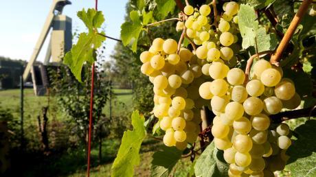 Deutscher Wein wird international für seine Süße geschätzt.