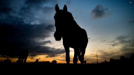 Pferd Symbol Feature