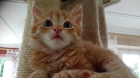 Fufu Kater Katze