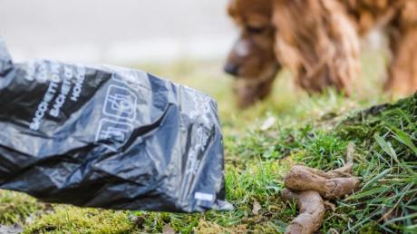 Weil er darauf hingewiesen wird, ein Hundehäufchen aufzuheben: Hundehalter schlägt im Landkreis Dachau einem Mann mit der Faust ins Gesicht.