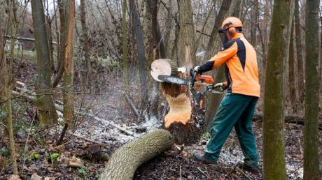 Wegen Baumfällarbeiten  ist die Staatsstraße bei Fristingen von Dienstag auf Mittwoch kommender Woche  gesperrt.
