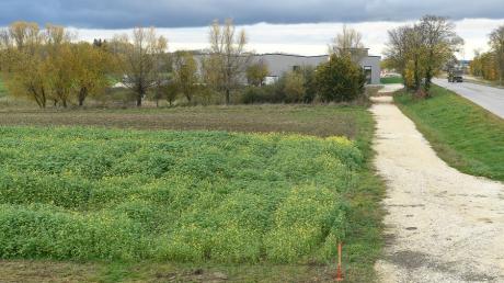 Auf bislang als Grünbereich ausgewiesenen Flächen wollen Unternehmen in Burtenbach westlich der Straße Am Kögel-Werk bauen.