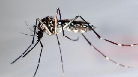 Durch den Klimawandel nehmen auch die von Mücken übertragenen Erkrankungen wie Dengue zu. Foto: Gustavo Amador/epa efe/dpa
