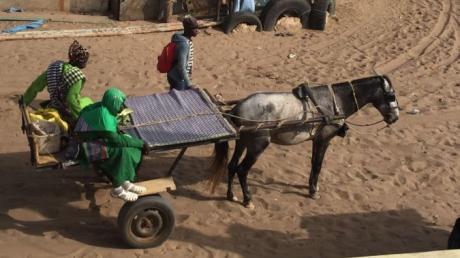 Esel und Pferd sind typische Transportmittel im Senegal, viele Autos gibt es nur in größeren Städten.