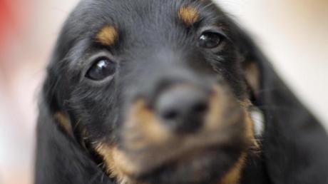 Hundewelpen schenkt die Münchner Welpenklappe eine zweite Chance.