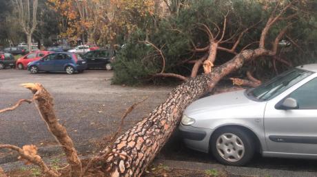 Ein entwurzelter Baum liegt in Rom auf einer Straße. Heftige Schnee- und Regenfälle haben ein Wetterchaos verursacht.