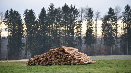 Die Art der Bewirtschaftung des rund 250 Hektar großen Osterberger Gemeindewalds ist im Gemeinderat nach wie vor stark umstritten.