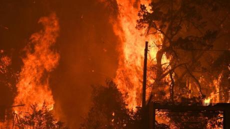 Seit Wochen kämpfen die Australier gegen eine Vielzahl an Buschbränden.