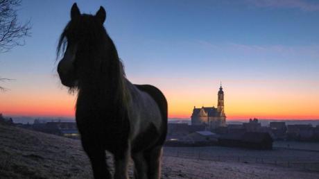 Ein Pferd hat in Unterfranken seine Reiterin abgeworfen und den Heimweg alleine angetreten. Die Frau wurde eine Stunde nach dem Sturz von Bergwacht und Feuerwehr gefunden.