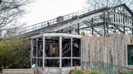Das Affenhaus im Zoo Krefeld wurde bei einem Brand komplett zerstört. Mehr als 30 Tiere starben in den Flammen.
