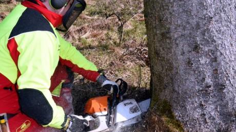 Bei Waldarbeiten in Schwenningen (Symbolfoto) hat ein Ast einen 48-Jährigen am Kopf getroffen.