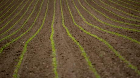 Die Landwirtschaft steht gerade im Zentrum einer heftigen Debatte. Auf der Grünen Woche prallen die verschiedenen Positionen aufeinander.