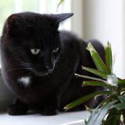 Nicht alle Zimmerpflanzen sind für Katzen und andere Haustiere geeignet.