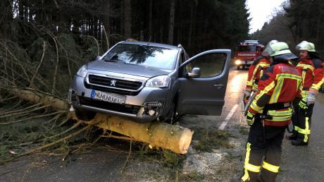 Zahlreiche umgestürzte Bäume mussten die Feuerwehren in der Region zur Seite räumen. Unser Bild entstand bei Dietenheim.