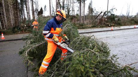 """Orkan """"Sabine"""" wütet auch im Landkreis Landsberg. Im Industriegebiet im Landsberger Westen fiel eine Fichte um. Bauhofmitarbeiter beseitigten den Baum."""