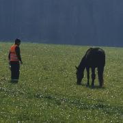 Die Berufsfeuerwehr Augsburg hatte eine unerwartete Begegnung mit einem Pferd.