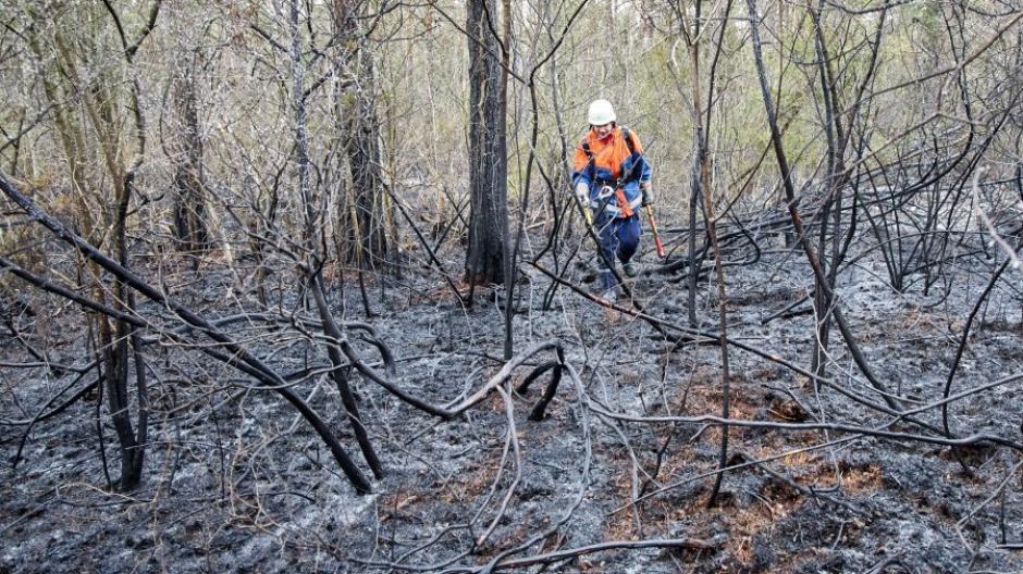 Berufsfeuerwehr und einige Freiwillige Feuerwehren der Stadt Augsburg waren beim Waldbrand im Siebentischwald im Einsatz. Der Verursacher wurde noch nicht gefunden.