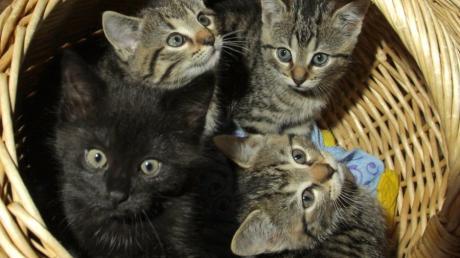 Ein Unterallgäuer Rentner hielt 70 Katzen in seiner Wohnung. Er wolle den Tieren helfen, sagte er gegenüber unserer Redaktion.