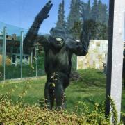 Wegen der Corona-Krise ist der Zoo aktuell geschlossen. Beim Rundgang unseres Fotografen wirken die meisten Tiere überrascht, dass mal wieder Besucher da sind.