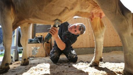 Am liebsten frisiert Landwirt Tobias Guggemos aus Rückholz die Brown-Swiss-Kuh Granit.
