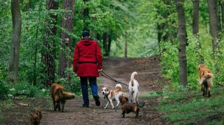 Zwei Hundebesitzerinnen sind am Mittwochmorgen im Weißenhorner Wald aneinandergeraten.