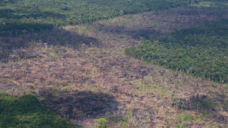 Abgeholzte Fläche im Amazonas-Regenwald.