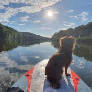 Mischlingshündin Simba steuert in ruhigem Gewässer der Sonne entgegen.  So schön ist es auf der Donau zwischen Ober- und Unterhausen.