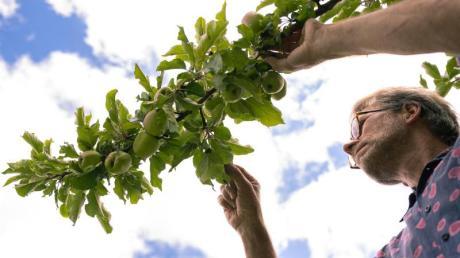 Im Landkreis Aichach-Friedberg gibt es zahlreiche Apfel- und Birnensorten.