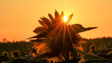 In den kommenden Tagen gibt es in der Region viel Sonne.