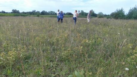 Seit 1984 pflegt die Ortsgruppe Lechrain im Bund Naturschutz die Sander Heide.