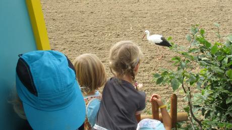 Die Kinder waren fasziniert vom Storch in der Nähe des Kindergartens in Reutti.