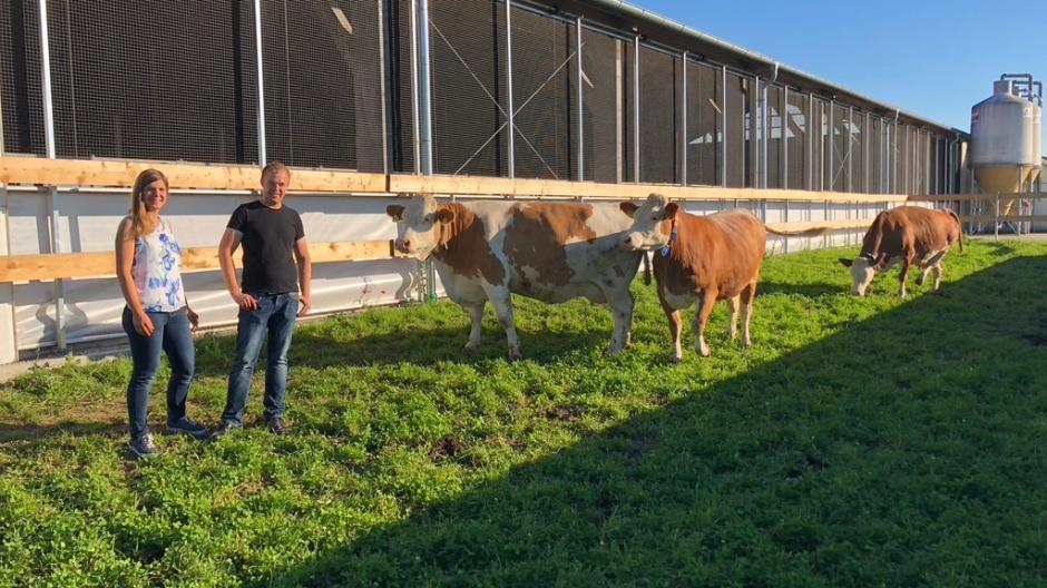 """Auf der """"Wellness-Weide"""" der Augsburger Landwirte Juliane und Stefan Stork können die Kühe Sonne und frische Luft tanken."""