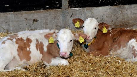 In Kissing möchte ein Landwirt zwei Bullenmastställe errichten. Im Bauaussschuss wurde über den Standort diskutiert.