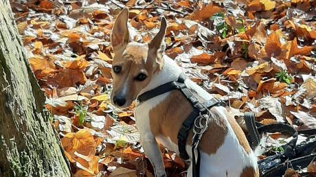 Die Hinterlassenschaften mancher Hunde sorgen in Binswangen für Ärger.