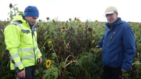 August (rechts) und Tobias Drexler haben in Steindorf bereits zum zweiten Mal zur Begutachtung eine Zwischenfrucht- Demoanlage errichtet.