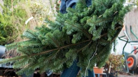 Nach dem Weihnachtsfest muss der Christbaum entsorgt werden. Nur wo?