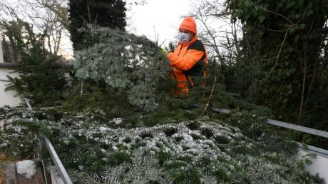 Ein Beispiel für das Engagement für die Kartei der Not: Die Bayerischen Staatsforsten verkaufte an mehreren Orten im Landkreis Augsburg Weihnachtsbäume. Ein Teil des Erlöses geht an das Leserhilfswerk.