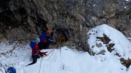 Der seit 23. Dezember im Bereich der Rohrkopfhütte vermisste Hund einer Kauferinger Familie  wurde von der Bergwacht Füssen in der  Gelben Wand gerettet.