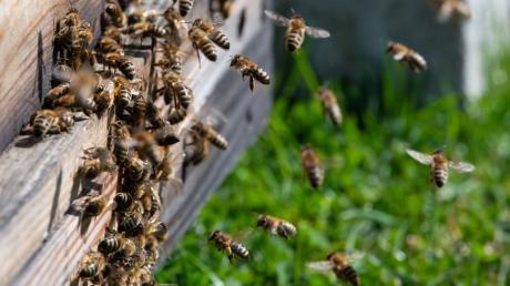 In Hainsfarth wurde ein Bienenstock beschädigt. (Symbolbild)