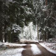 Leserfoto der KW 1: Der schneebedeckte Wald in Mertingen.