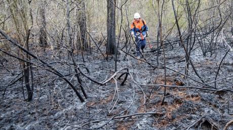 Drei Mal hat es im vergangenen Jahr im Augsburger Stadtwald gebrannt - die Polizei geht von Brandstiftung aus.