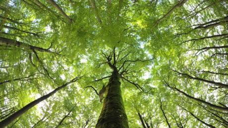 Seit Jahren wird über einen möglichen neuen Nationalpark im Steigerwald gestritten.