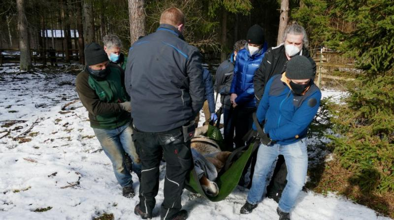 Wildpferd Lars reist von Augsburgs Stadtwald nach Warschau