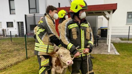 Zu einem ungewöhnlichen Rettungseinsatz wurde die Feuerwehr Kissing am Sonntagmorgen gerufen.