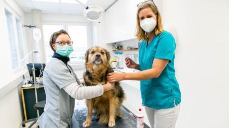 Tierärztin Sabine Lentz (rechts) demonstriert an ihrem Hund Bubu das Chippen. Fachangestellte Martina Mertl hält ihn fest.