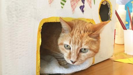 Katze Meredith hat es sich in ihrem neuen Haus gemütlich gemacht. Wie man so einen Unterschlupf für Vierbeiner basteln könne, verrät die Katzenexpertin Sabine Maurus.