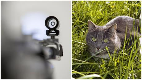 Wurde in Unterelchingen eine Katze angeschossen?